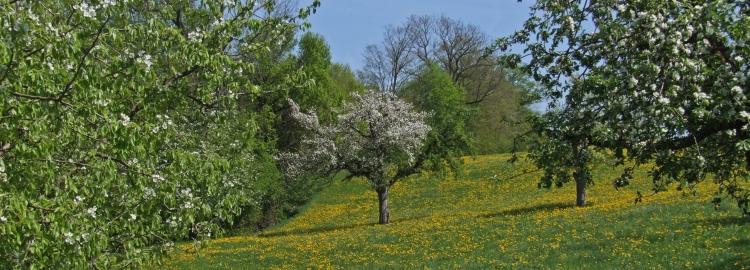 Rural Thurgovia in spring bloom