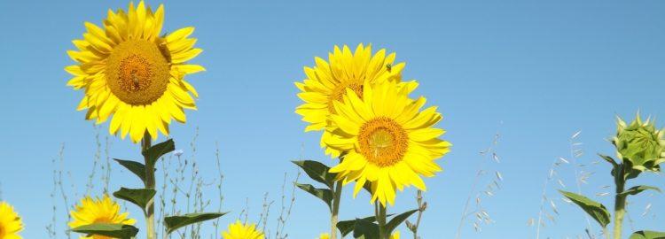 summer-1023065_1280